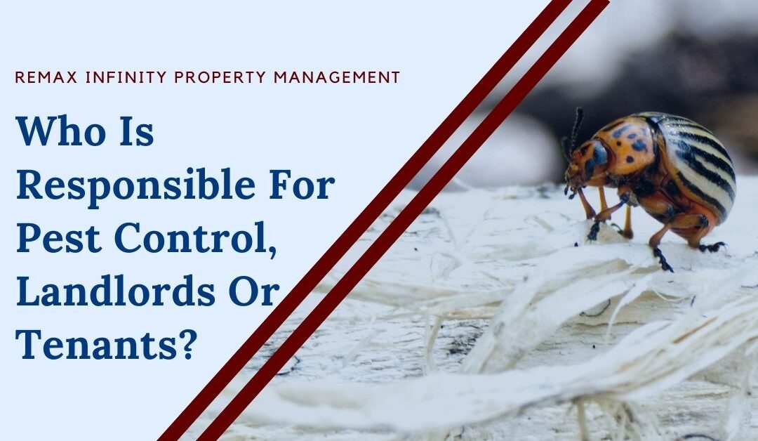 Who Is Responsible For Pest Control, Landlords Or Tenants?
