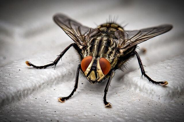 tenants may be the ones causing pest problems