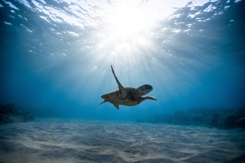 sea turtle conservation in Navarre